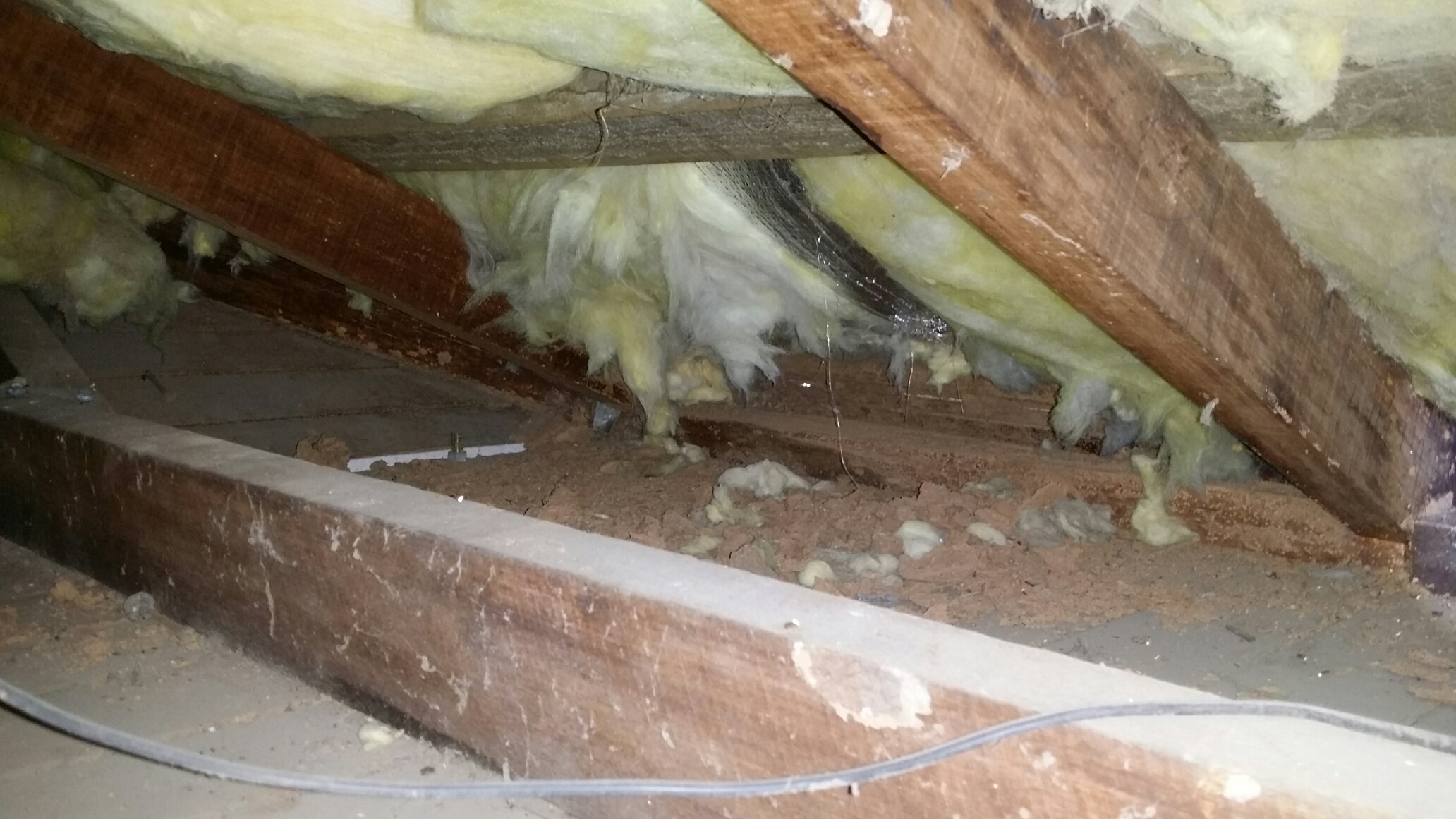 damage found in pest inspection